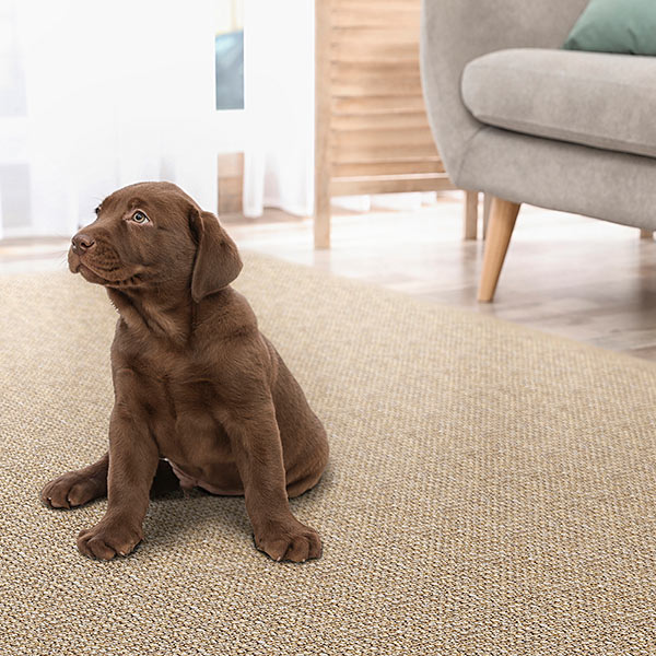 all paws welcome: easy to clean, soft fibers &  stunning style (ravenna in mesquite)